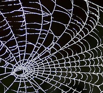 Ccwebfrosty